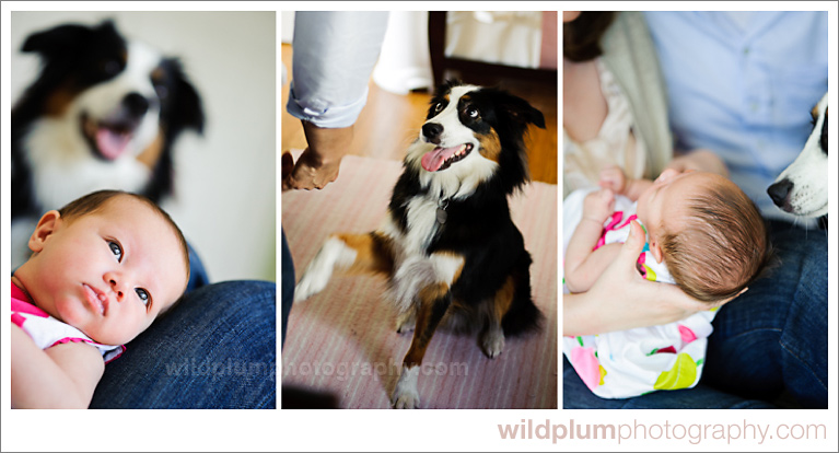 Wild Plum Photography | San Francisco Pet Photography